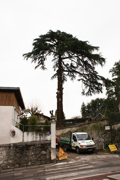 Cèdre - Villa Charcot